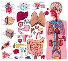 Organ-i-telo